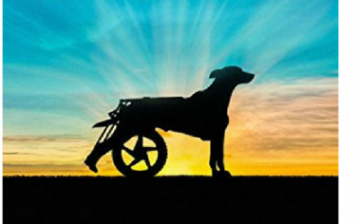 Inspiring New Book Features Alpha-Stim® as Key to a Dog's Recovery