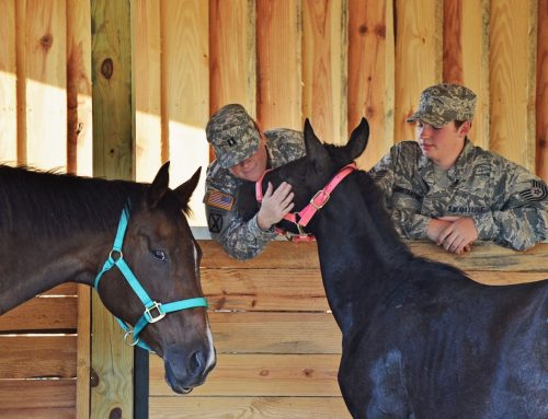 Healing Hoof Steps Equine Therapy Brings Relief with Horses and Alpha-Stim